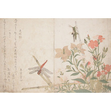 Kitagawa Utamaro: Red Dragonfly and Locust - Ronin Gallery