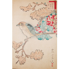 Sugakudo: Bull Headed Shrike and Winter Camelia - Ronin Gallery