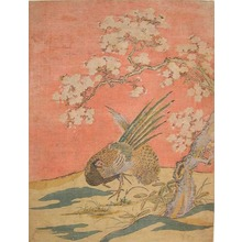 Isoda Koryusai: Pheasants Under Flowering Cherry Tree - Ronin Gallery