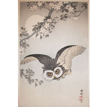 Shoson: Owl, Cherry Blossom and Moon - Ronin Gallery