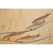 Utagawa Hiroshige: Sweet Fish in Tama River - Ronin Gallery