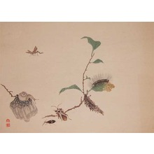 渡辺省亭: Group of Insects - Ronin Gallery