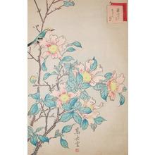 Sugakudo: Kikuitadaki and Sazanka Flower - Ronin Gallery