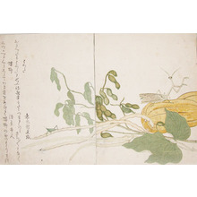 Kitagawa Utamaro: Cone-headed Grasshopper and Praying Mantis - Ronin Gallery