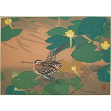 Rakuzan: Early Summer: Water Lilies and Snipe - Ronin Gallery