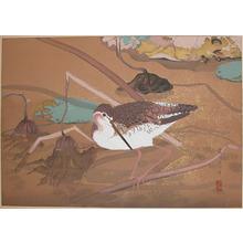 Rakuzan: Winter: Lotus Leaves and a Large Snipe - Ronin Gallery