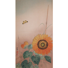 Koson: Small Butterfly and Sunflower - Ronin Gallery