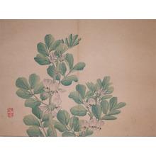Kenichiro: Flowering Pea - Ronin Gallery