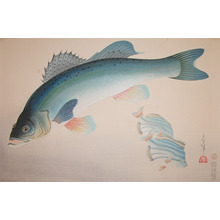 Bakufu: Japanese Sea Bass - Ronin Gallery