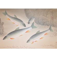 Bakufu: Salmon - Ronin Gallery