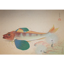 Bakufu: Sea Robin - Ronin Gallery
