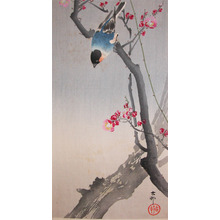 Koson: Bullfinch on Flowering Plum Tree - Ronin Gallery
