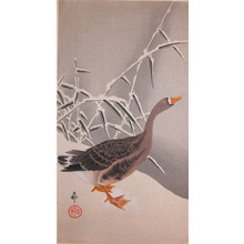 Koson: Goose and Reeds in Snow - Ronin Gallery
