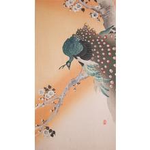 Koson: Green PeaFowl on Flowering Cherry - Ronin Gallery