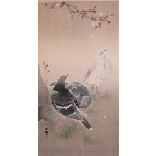 Koson: Pigeons and Cherry Blossoms - Ronin Gallery