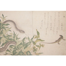 喜多川歌麿: Snake and Green Lizard - Ronin Gallery