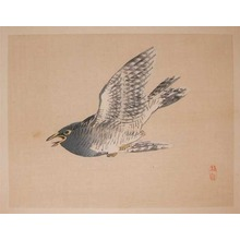 幸野楳嶺: Flying Cuckoo - Ronin Gallery