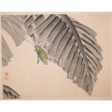 Kono Bairei: Katydid on Banana Leaf - Ronin Gallery