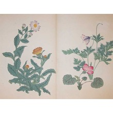 酒井抱一: Marigold,Pulsatilla Cernua and Philadelphia Dai - Ronin Gallery