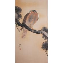 Koson: Hawk on Pine Branch - Ronin Gallery