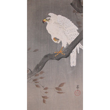 Koson: White Eagle on a Branch - Ronin Gallery