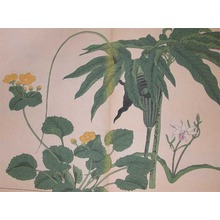 酒井抱一: Pinellia Pedatisecta, Hardy Orchid and Kingcup - Ronin Gallery