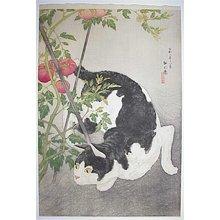 Watanabe Shotei: - Richard Kruml