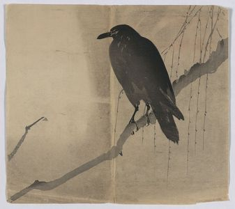 Unknown: Crow on a willow branch. - Library of Congress