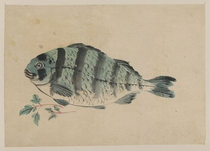 Unknown: [Fish] - Library of Congress