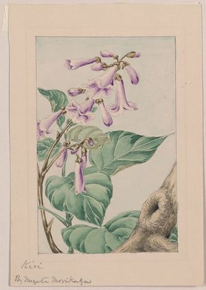 無款: [Kiri branch with flowers and leaves] / by Megata Morikaga. - アメリカ議会図書館