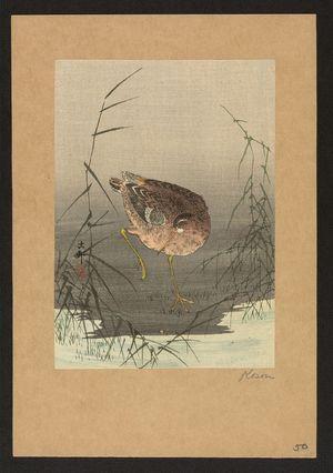 Ohara Koson: Snipe bird in reeds. - Library of Congress