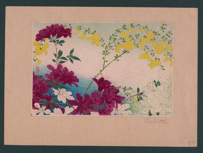 Unknown: Early summer flower blossoms. - Library of Congress