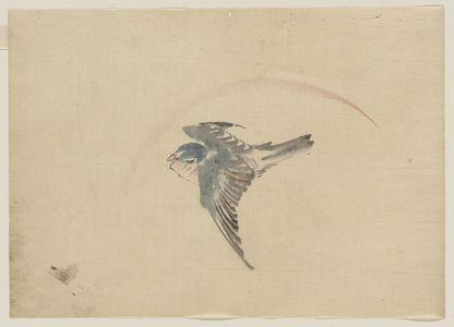 葛飾北斎: [A bird flying to the left, seen from above] - アメリカ議会図書館