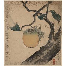 Katsushika Hokusai: Grasshopper eating persimmon. - Library of Congress