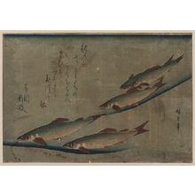 歌川広重: River trout (Ayu). - アメリカ議会図書館