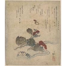 Katsushika Taitō II: Benkei crab and camellia. - アメリカ議会図書館