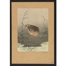 Ohara Koson: Snipe bird in reeds. - Library of Congress