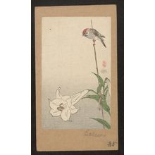 Baison: Small bird on lily plant. - Library of Congress