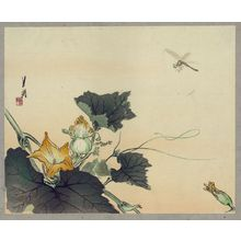 Ogata Gekko: Dragonfly and pumpkin. - Library of Congress