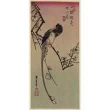 Utagawa Hiroshige: Plum blossom and magpie (long tailed cock onagadori). - Library of Congress