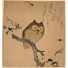 無款: Owl and magnolia. - アメリカ議会図書館
