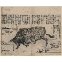 Tachibana Morikuni: [A large bull or ox] - アメリカ議会図書館