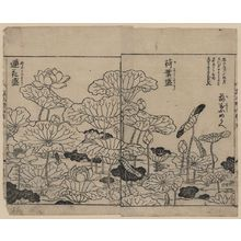 Tachibana Yasukuni: [Lotus plants in various stages of development] - アメリカ議会図書館
