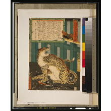 Utagawa: Changing times bring unseen things - true picture of a tiger. - アメリカ議会図書館