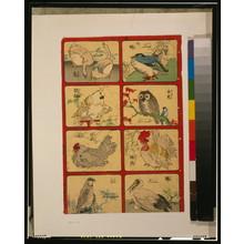 無款: [Various types of birds] - アメリカ議会図書館