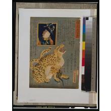 落合芳幾: Picture of a tiger. - アメリカ議会図書館