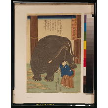 Utagawa Yoshitoyo: Big imported elephant from India. - Library of Congress