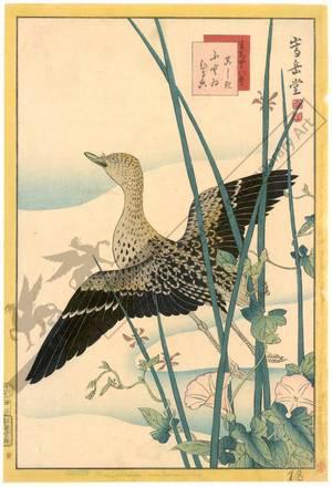 Nakayama Sugakudo: Snipe, Rush and convolvulus - Austrian Museum of Applied Arts