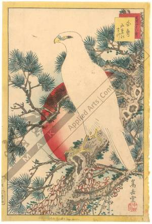 Nakayama Sugakudo: White hawk and white pine - Austrian Museum of Applied Arts
