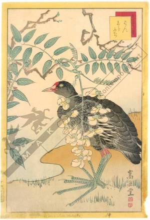 Nakayama Sugakudo: Moorhen and White Wisteria - Austrian Museum of Applied Arts